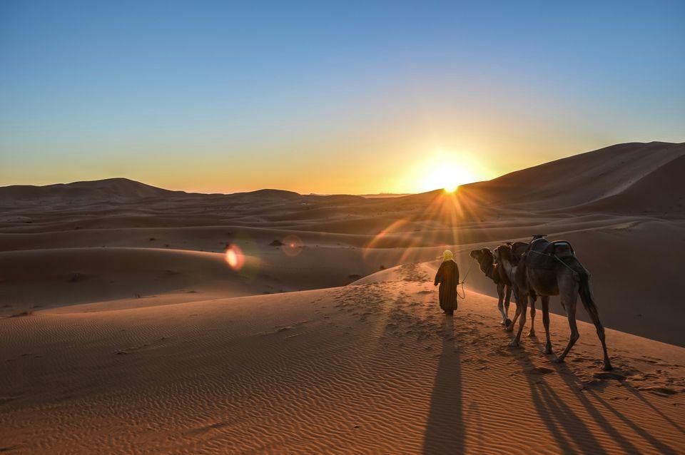 Chameaux dans le désert, Merzouga