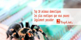 Top 10 animaux domestiques les plus exotiques que vous pouvez légalement posséder