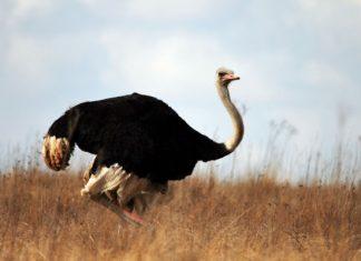 oiseaux les plus meurtriers