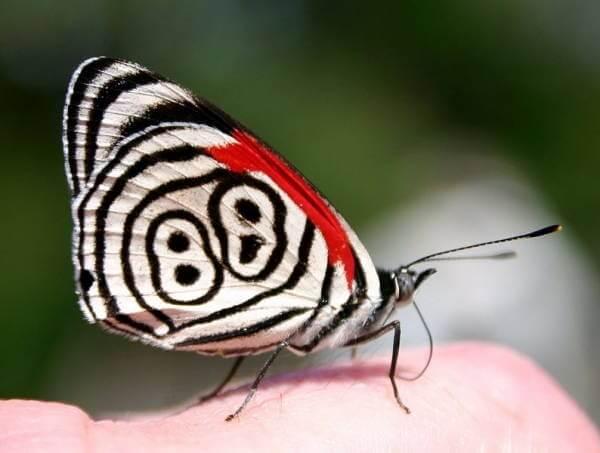 Les plus beaux papillons