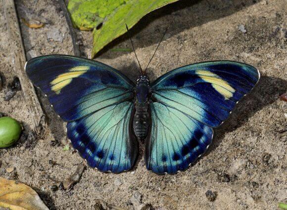 plus beaux papillons
