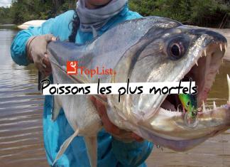 Top 10 des poissons les plus mortels du monde