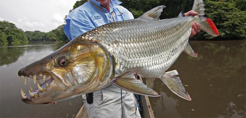 poissons les plus dangereux