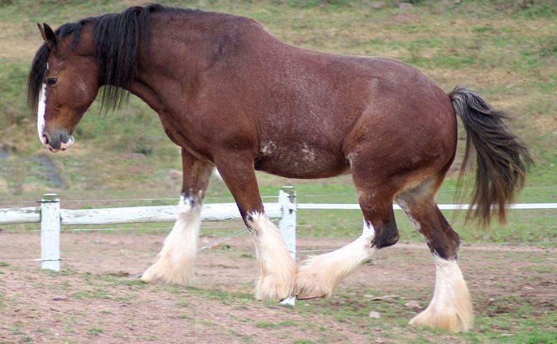 Les races de chevaux les plus chères