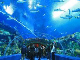 Top 10 aquariums les plus étonnants