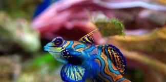 plus beaux poissons