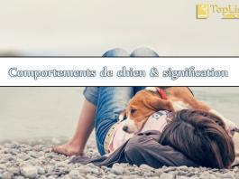 Top 10 comportements de chien et leur signification